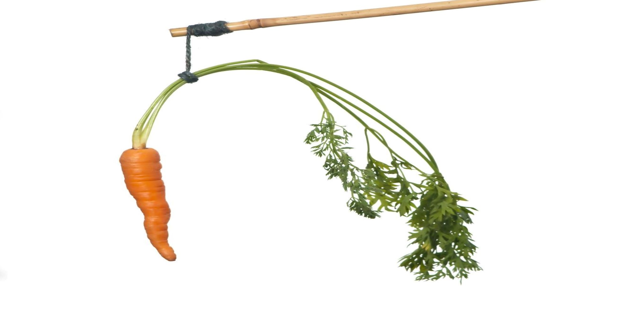 Carrot being dangled on a stick